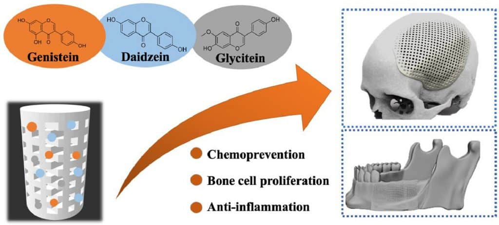 3 main soy isoflavones (genistein, daidzein and saccharin)